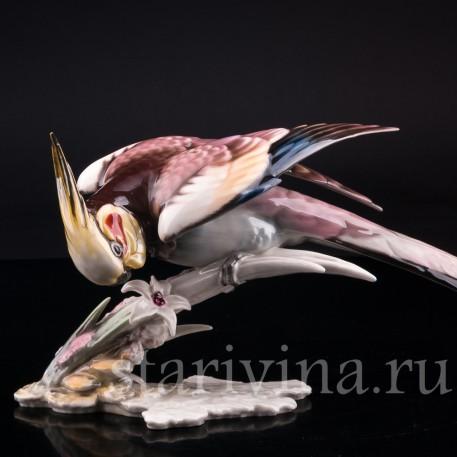 Статуэтка птицы из фарфора Попугай Корелла, Hutschenreuther, Германия, 1955-68 гг.