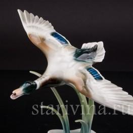Статуэтка птицы из фарфора Взлетающий селезень, Alka Kaiser, Германия, сер. 20 в.